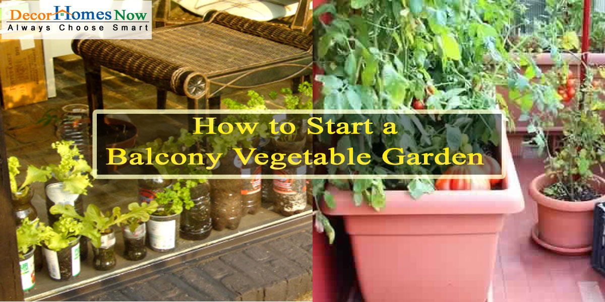 How to Start a Balcony Vegetable Garden